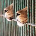 Gli animali al circo non si divertono.