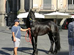 Un bel cavallo nero di razza frisona, anche lui sfilerà.