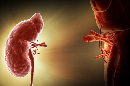 Futuri trattamenti dell'insufficienza renale