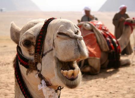 Egitto. Turismo in ripresa, nonostante tutto
