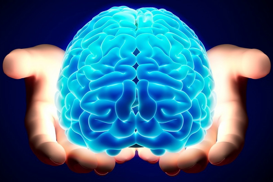 Illustrazione del cervello umano