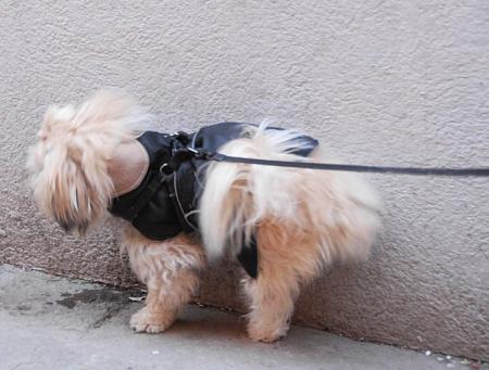 Cane mentre fa pipì - Foto di Sebastiano Casellati