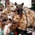 A Yulin si mangiano i cani