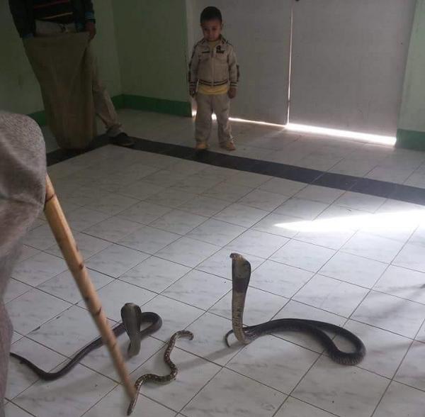Un piccolo degente alle prese con dei serpenti