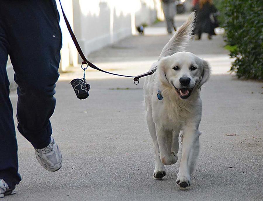 Cane a passeggio per strada