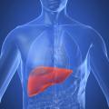 Il fegato