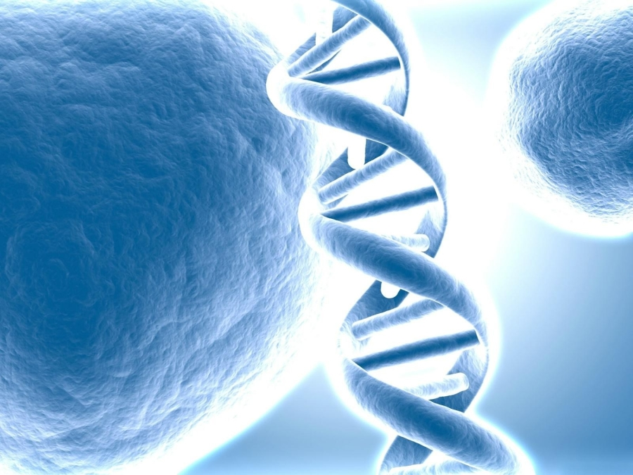 Molecole di DNA