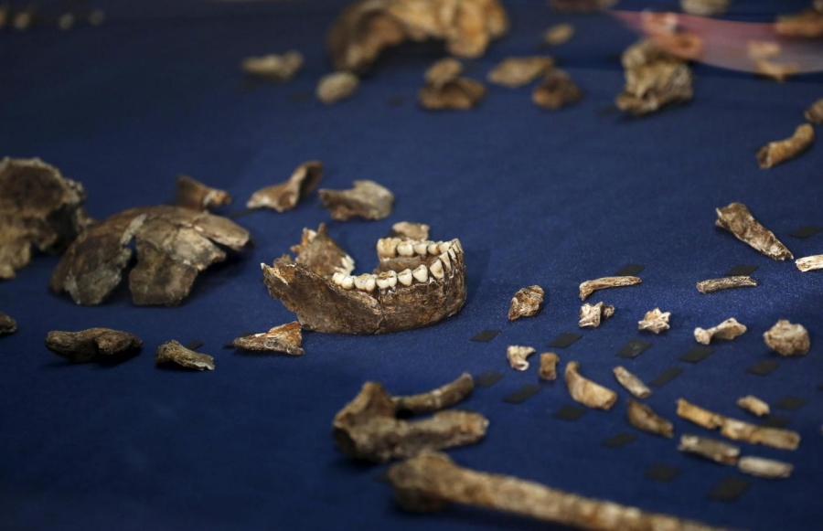 Resti dell'Homo Naledi