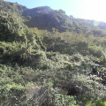 La Selva di Pianura - le foto sono di Riccardo Bruno