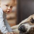 cani e bambini, un rapporto importante
